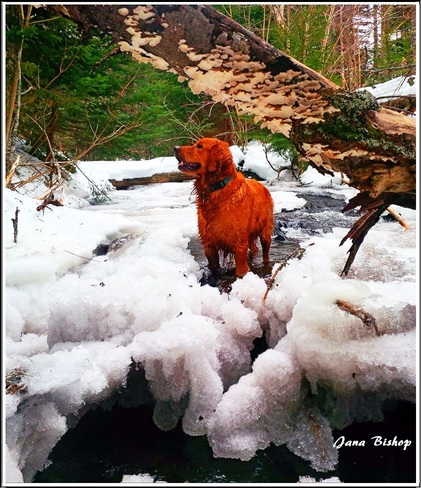 Icy Dip Before The Thaw Canning, Nova Scotia Canada