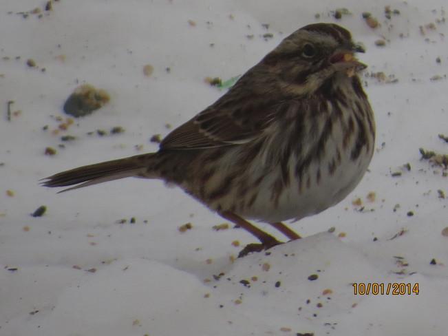 feeding the birds Rock Harbour, Newfoundland and Labrador Canada