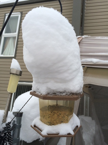 Bird feeder covered in snow Fort McMurray, Alberta Canada