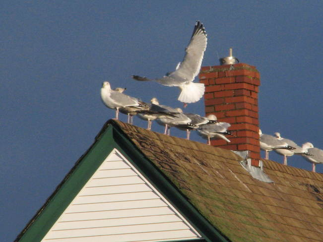 On the rooftop Maces Bay, New Brunswick Canada