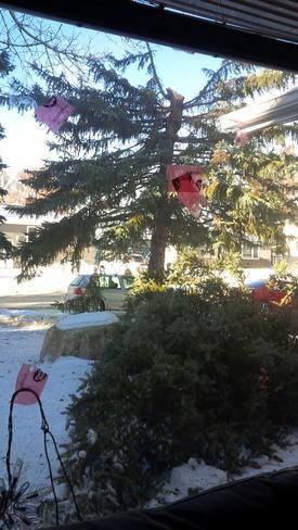 Windy!!!! Asimakaniseekan Askiy I.R. 102A, Saskatchewan Canada