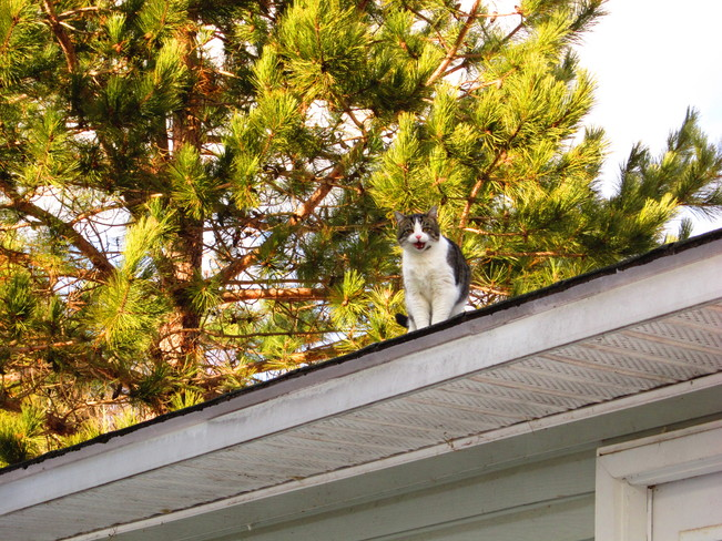 cat on garage roof Temperance Vale, New Brunswick Canada