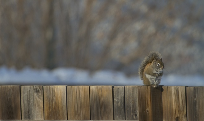 Little Guy on the fence Winnipeg, Manitoba Canada