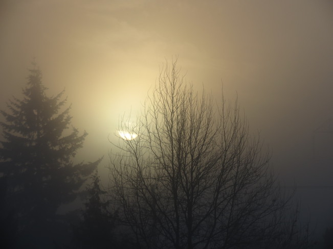 Sunrise in the Mist Abbotsford, British Columbia Canada