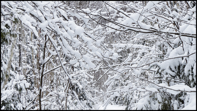 Sheriff Creek red trail snowy branches. Elliot Lake, Ontario Canada
