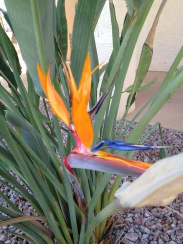 PARADISE Mesa, Arizona United States