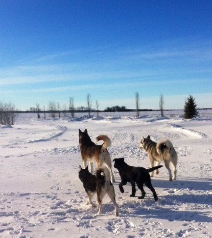 enjoying a nice warm day Sylvania, Saskatchewan Canada