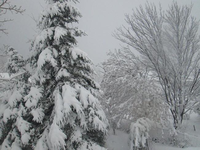 Snow Storm Hare Bay, Newfoundland and Labrador Canada