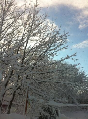 snow covered trees Sydney, Nova Scotia Canada