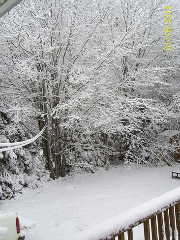 What a Surprise! My Back Yard this Morning Truro, Nova Scotia Canada