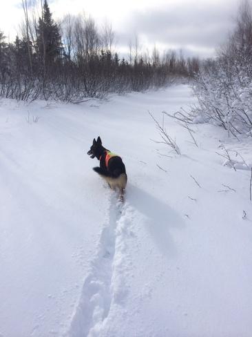 Winter Walk in Wonderland Grand Falls-Windsor, Newfoundland and Labrador Canada