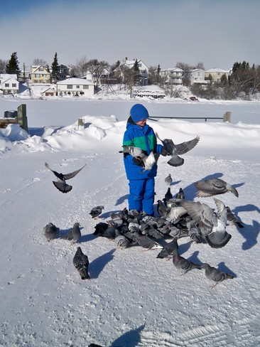 Feeding the pigeons on a cold day Timmins, Ontario Canada