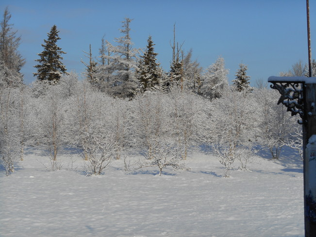 Snow Covered Trees Bridgetown, Prince Edward Island Canada