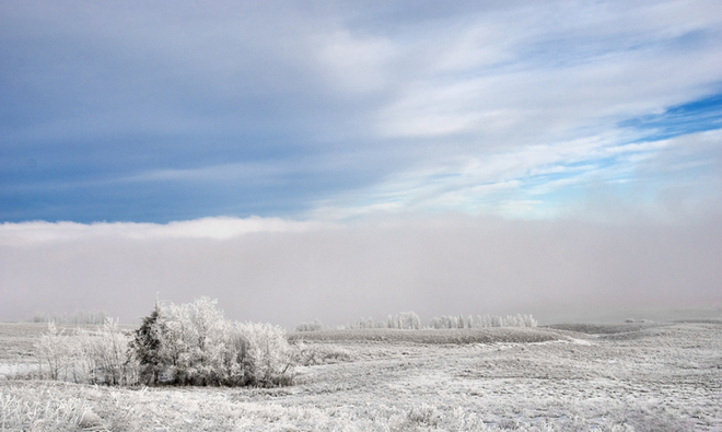 Frosted Plain