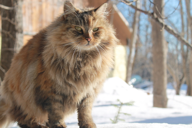Buzzy the barn yard cat Moncton, New Brunswick Canada