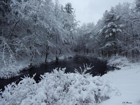 Maple Falls Brook