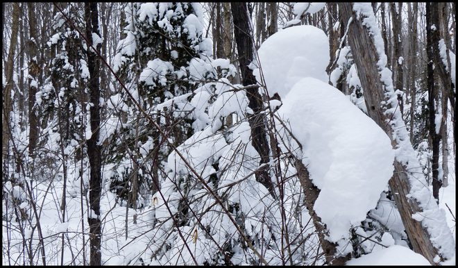 Sheriff Creek red trail snow baby? Elliot Lake, Ontario Canada