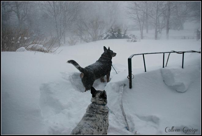 Braving the Blizzard Centreville, Nova Scotia Canada