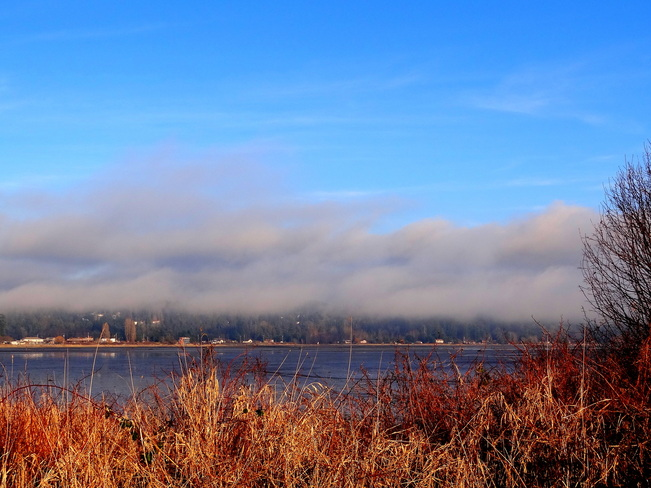 Fog, low tide and sunshine Courtenay, British Columbia Canada