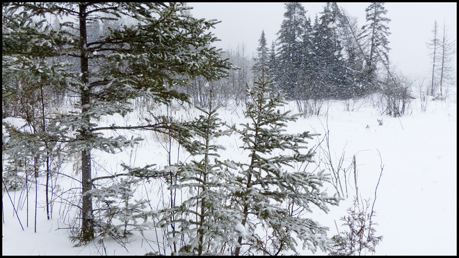 Sheriff Creek snow and wind at the pond. Elliot Lake, Ontario Canada