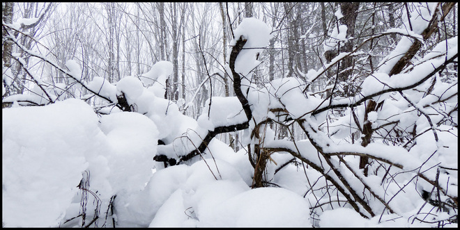 Sheriff Creek red trail snow covered branches. Elliot Lake, Ontario Canada