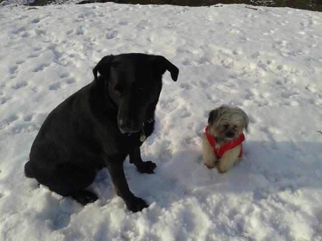 Big Dog Little Dog Dartmouth, Nova Scotia Canada