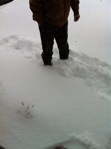 snowing and blowing drifting Belleville, Ontario Canada