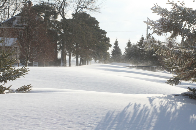 Snow Drifts Take Over Yard Chatham, Ontario Canada