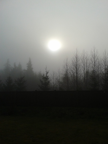 Sun hiding behind the fog Campbell River, British Columbia Canada