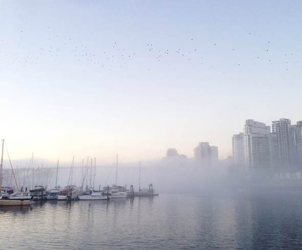 Fog in Vancouver Vancouver, British Columbia Canada