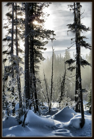 Snowshoe trail at Larch Hills Salmon Arm, British Columbia Canada