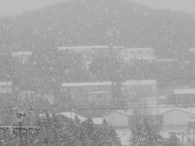 The snow has started! Freshwater, Newfoundland and Labrador Canada