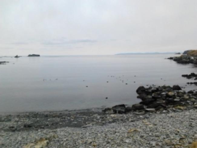 Clam before the storm Carbonear, Newfoundland and Labrador Canada