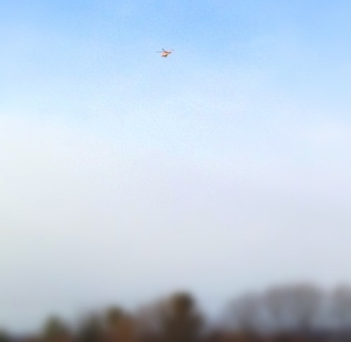 Is it a bird or a helicopter Orillia, Ontario Canada