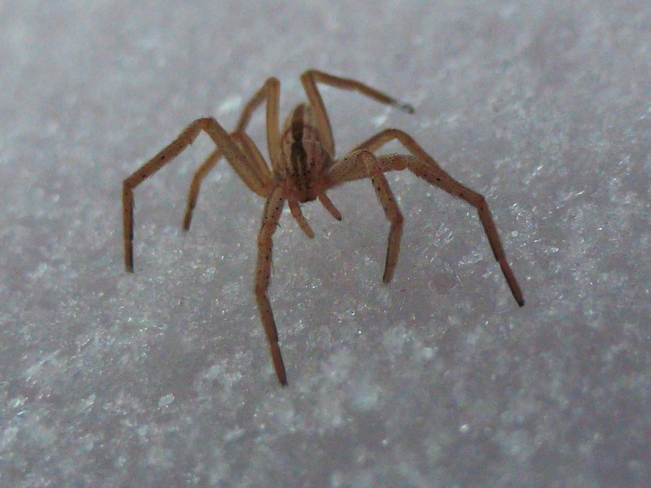 FACE TO FACE WITH A SNOW SPIDER!!!!!!!! Cranbrook, British Columbia Canada