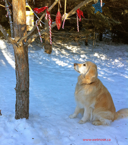 Waiting at the cookie tree Stittsville, Ontario Canada