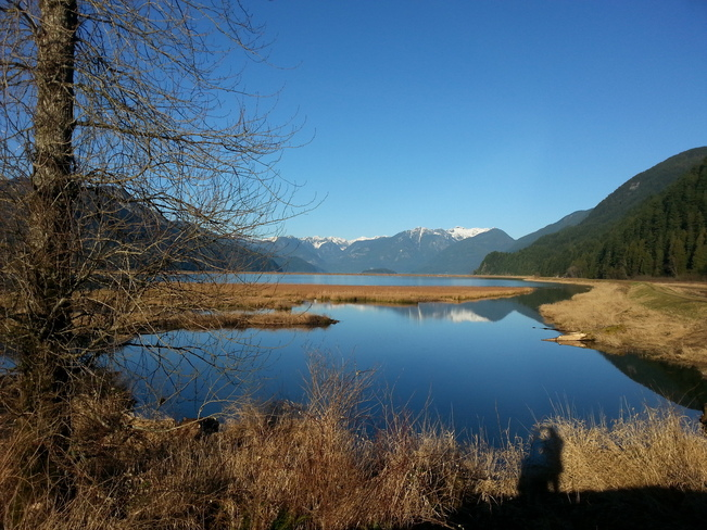 SPRINGTIME IN JANUARY AT PITT LAKE Pitt Meadows, British Columbia Canada