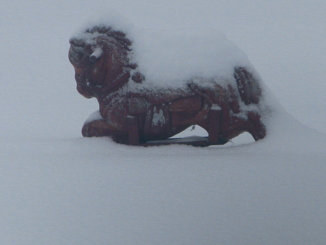 snow pony Golden Lake, Ontario Canada