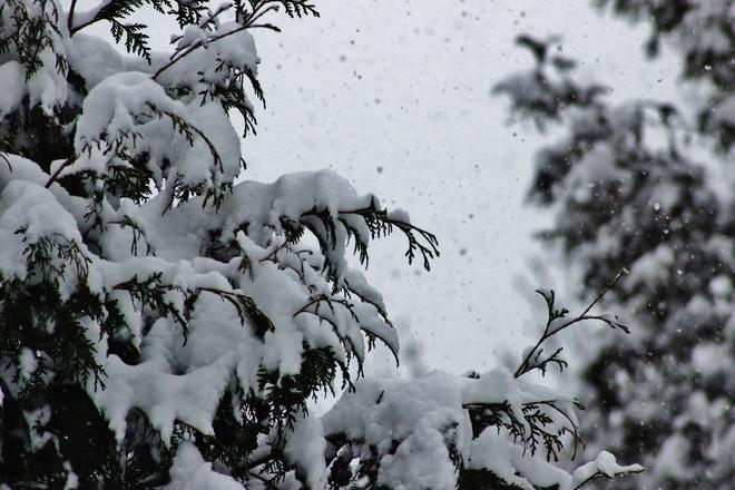 snow storm Seaforth, Ontario Canada