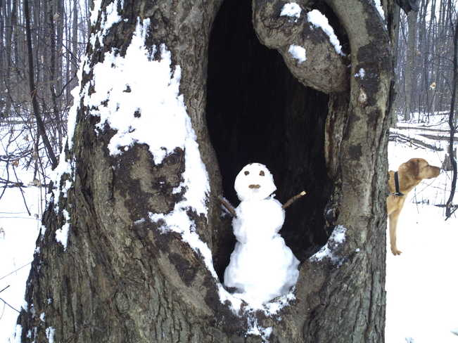 Snowmans tree fort Chatham, Ontario Canada