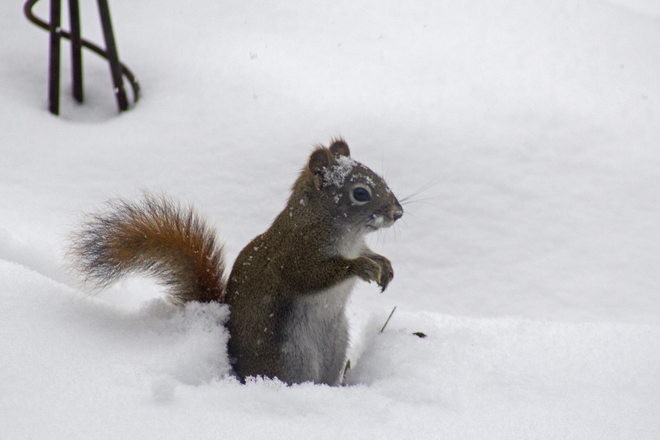 Squirrely Weather Renfrew, Ontario Canada