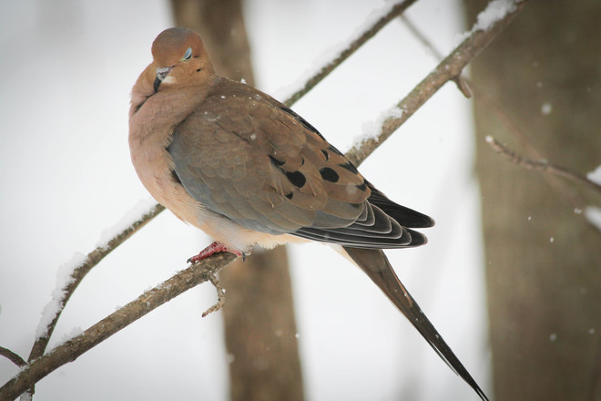 Sleepy Dove Kingston, Ontario Canada
