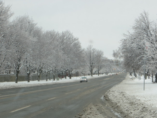 Winter Wonderland Scarborough, Ontario Canada