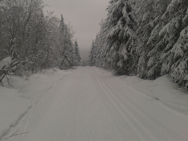 Cool day of skking at Hallis Lake cross country ski area Quesnel, British Columbia Canada