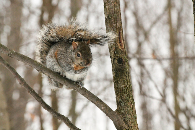 Going for that Windblown Tail look! Kingston, Ontario Canada