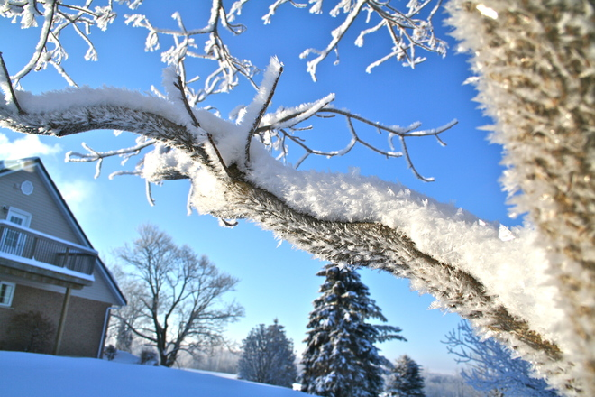 Frosty Morning Seaforth, Ontario Canada