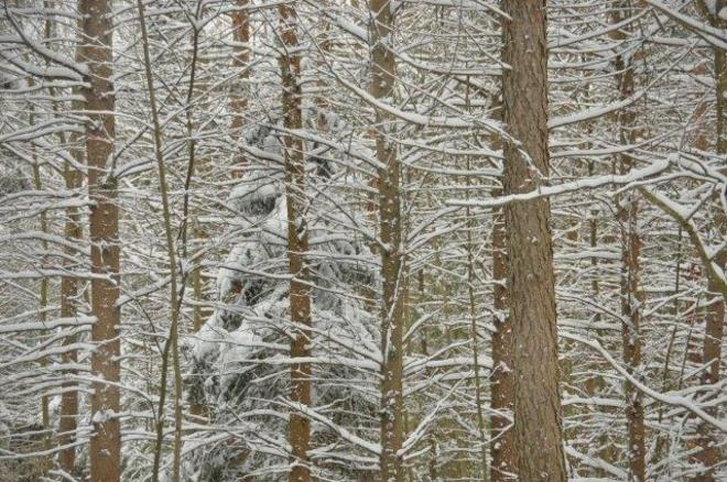 Tree Ghost Erin, Ontario Canada