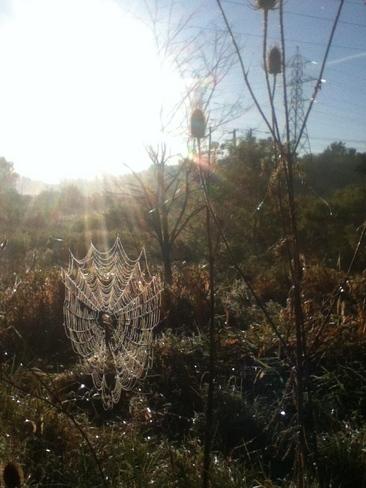 spider web London, Ontario Canada