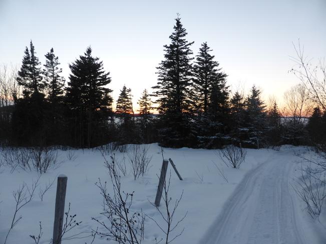 Evening On The Trail Birchy Bay, Newfoundland and Labrador Canada