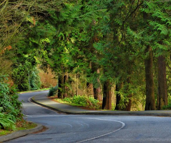 Follow the winding road to Spring! Vancouver, British Columbia Canada